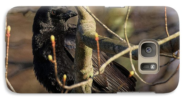 Galaxy Case featuring the photograph Springtime Crow Square by Bill Wakeley