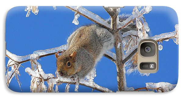 Galaxy Case featuring the photograph Squirrel On Icy Branches by Doris Potter