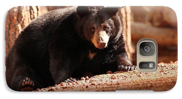 Bear Galaxy S7 Case - Staredown by Rob Blair