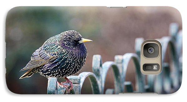 Starling Juvenile Male Galaxy S7 Case