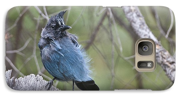 Galaxy Case featuring the photograph Stellar's Jay by Gary Lengyel