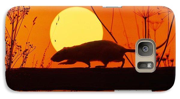 Stranglers Rattus Norvegicus Rat Galaxy S7 Case