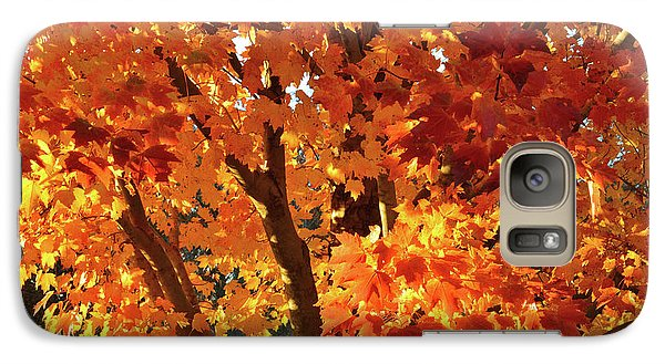 Galaxy Case featuring the photograph Sugar Maple Sunset by Ray Mathis