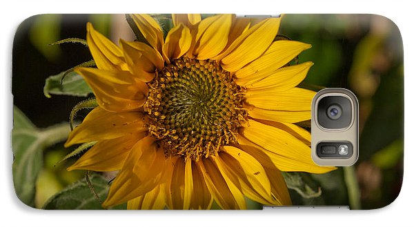 Galaxy Case featuring the photograph Sun Flower by Lynn Hughes