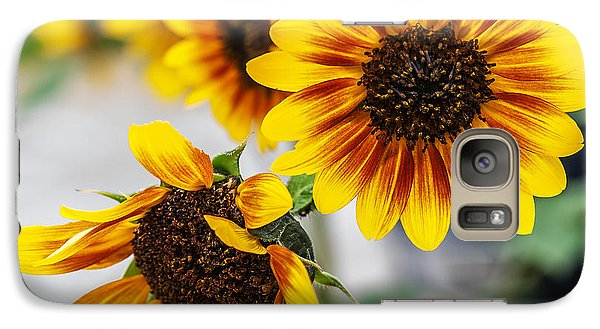 Galaxy Case featuring the photograph Sun Flowers In Bloom by Edward Peterson