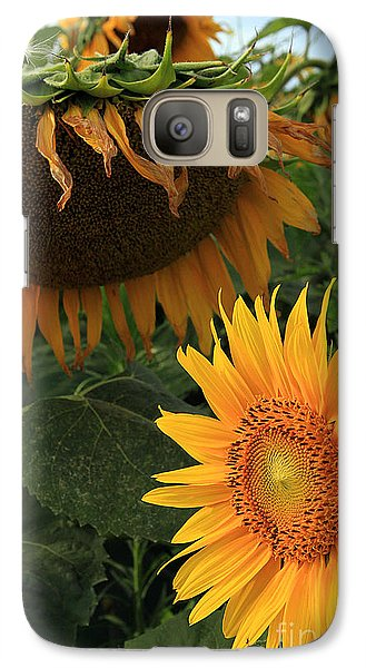 Galaxy Case featuring the photograph Sun Flowers  Past  And  Present  by Paula Guttilla