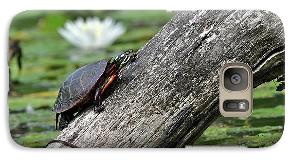 Galaxy Case featuring the photograph Turtle Sunbathing by Glenn Gordon