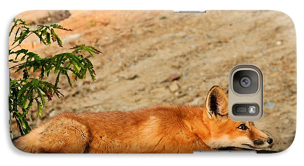 Galaxy Case featuring the photograph Sunbathing by Kristin Elmquist