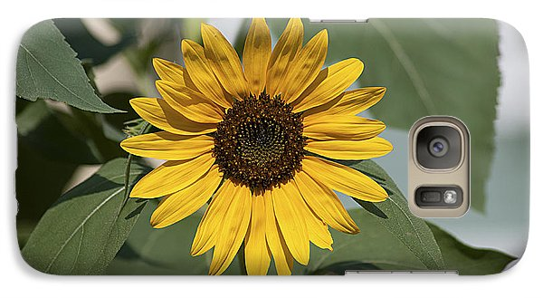 Galaxy Case featuring the photograph Sunflower 20120718_06a by Tina Hopkins