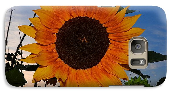 Sunflower In The Evening Galaxy S7 Case
