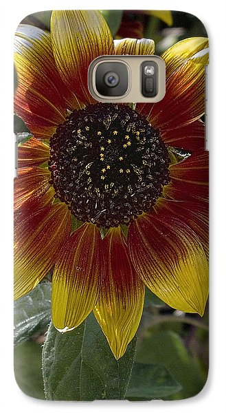 Galaxy Case featuring the photograph Sunflower by Michael Flood