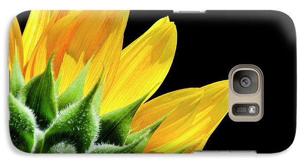 Galaxy Case featuring the photograph Sunflower Petals by Christina Rollo