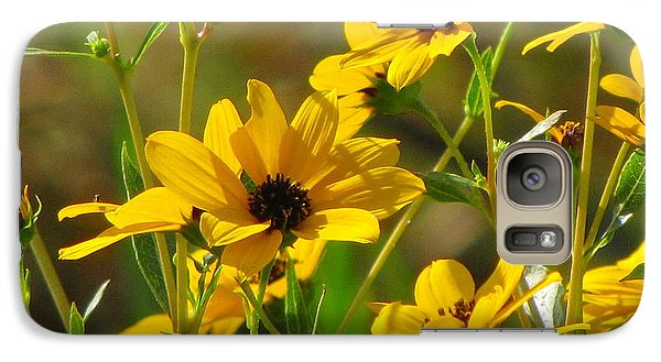 Galaxy Case featuring the photograph Sunflowers Along The Trail by Barbara Bowen