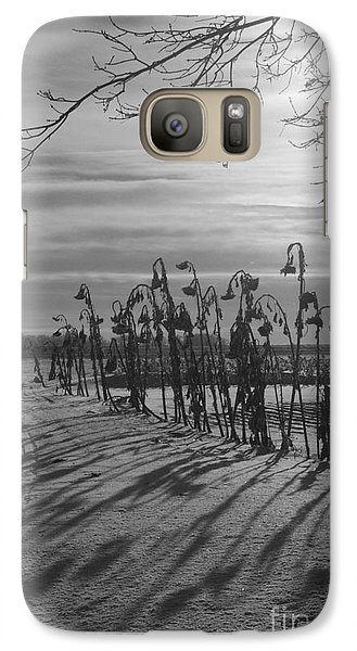 Galaxy Case featuring the photograph Sunflowers In The Winter Sun by Mary Mikawoz