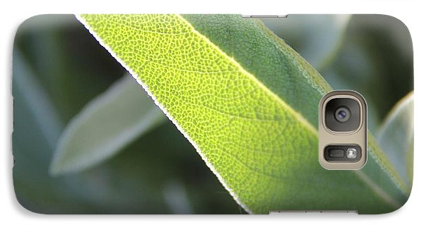 Galaxy Case featuring the photograph Sunlit Sage Leaf by Elizabeth Sullivan