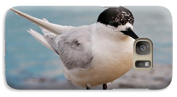 Galaxy Case featuring the photograph Tern 1 by Werner Padarin