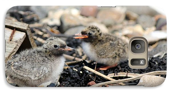 Galaxy Case featuring the photograph Tern Chicks by David Grant