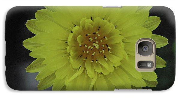 Galaxy Case featuring the photograph Texas Dandelion by Robyn Stacey