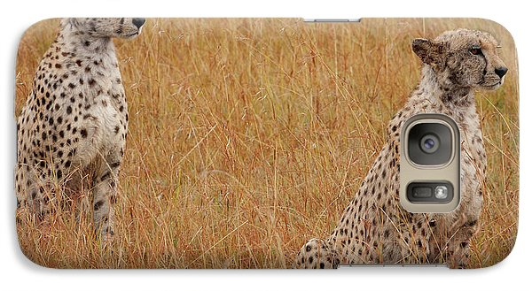 The Cheetahs Galaxy Case by Nichola Denny