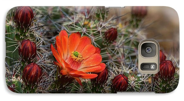 Galaxy Case featuring the photograph The First Bloom  by Saija Lehtonen