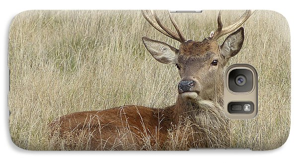 Galaxy Case featuring the photograph The Gentle Stag by LemonArt Photography