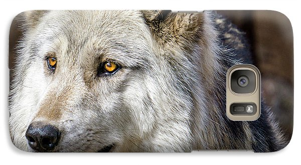 Galaxy Case featuring the photograph The Gray Wolf by Teri Virbickis