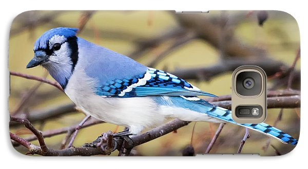 The Winter Blue Jay  Galaxy S7 Case by Ricky L Jones