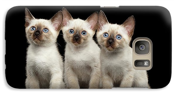 Cat Galaxy S7 Case - Three Kitty Of Breed Mekong Bobtail On Black Background by Sergey Taran