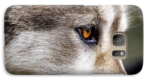 Galaxy Case featuring the photograph Timber Wolf Stare by Teri Virbickis