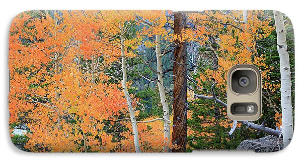 Galaxy Case featuring the photograph Twisted Pine by David Chandler