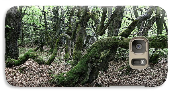 Galaxy Case featuring the photograph Twisted Trunks Of Beech Trees - Old Beech Forest by Michal Boubin