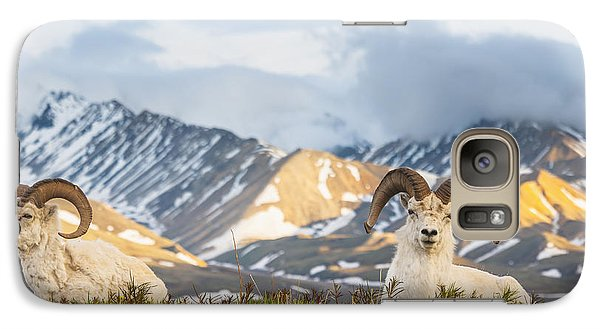 Two Adult Dall Sheep Rams Resting Galaxy S7 Case by Michael Jones