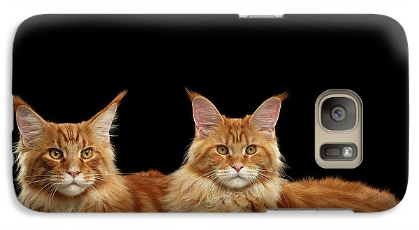 Cat Galaxy S7 Case - Two Ginger Maine Coon Cat On Black by Sergey Taran