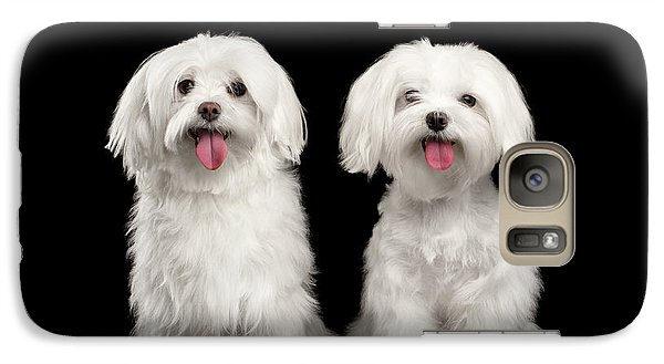 Two Happy White Maltese Dogs Sitting, Looking In Camera Isolated Galaxy S7 Case