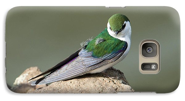 Violet-green Swallow Galaxy S7 Case