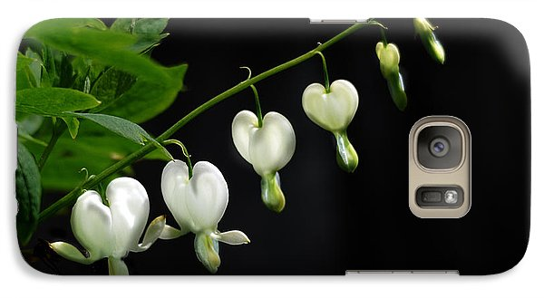 Galaxy Case featuring the photograph White Bleeding Hearts by Susan Capuano