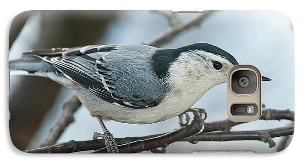 Galaxy Case featuring the photograph White Breasted Nuthatch 2017 2 by Lara Ellis