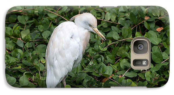 Galaxy Case featuring the photograph White Egret by Monte Stevens