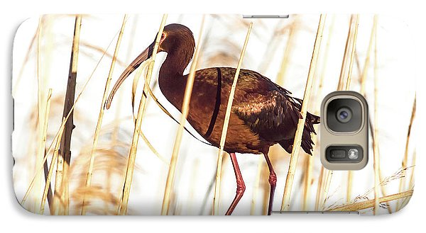 Galaxy Case featuring the photograph White Faced Ibis In Reeds by Robert Frederick