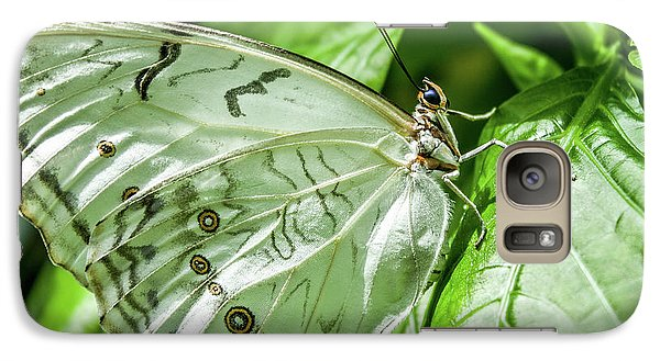 Galaxy Case featuring the photograph White Morpho Butterfly by Joann Copeland-Paul