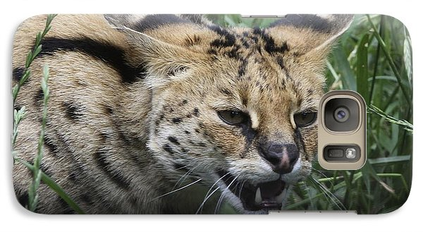 Galaxy Case featuring the photograph Wild Cat by Gary Bridger