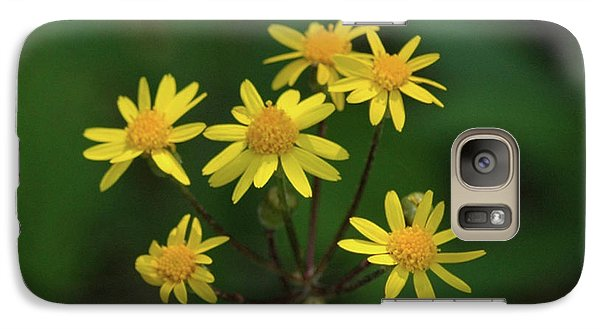 Galaxy Case featuring the photograph Wild Meadow Daisies by LeeAnn McLaneGoetz McLaneGoetzStudioLLCcom