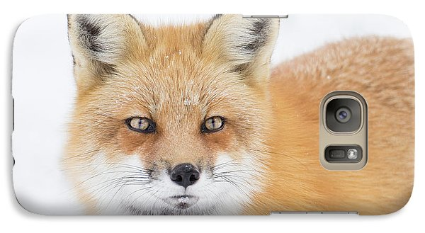 Galaxy Case featuring the photograph Winter Portrait by Mircea Costina Photography