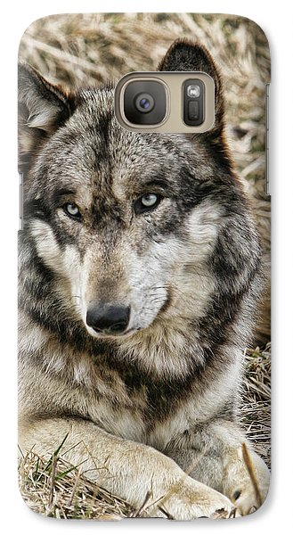 Galaxy Case featuring the photograph Wolf Portrait by Shari Jardina