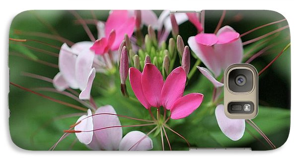 Galaxy Case featuring the photograph Wonders Of Cleome by Deborah  Crew-Johnson