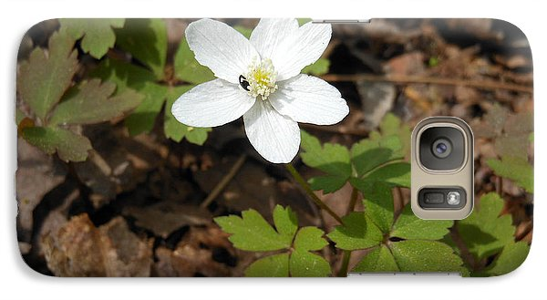 Galaxy Case featuring the photograph Wood Anemone by Linda Geiger