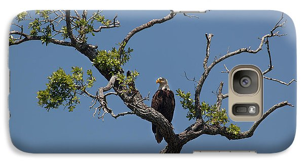 Galaxy Case featuring the photograph Yawkey Wildlife Reguge - American Bald Eagle by Suzanne Gaff