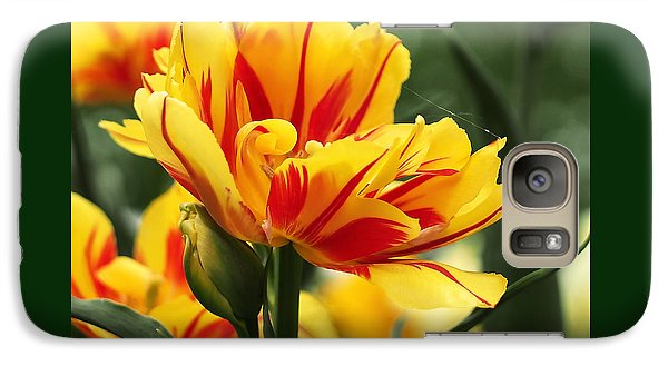 Galaxy Case featuring the photograph Yellow And Red Triumph Tulips by Rona Black
