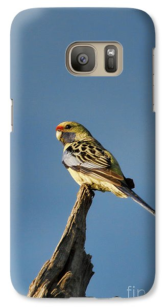 Galaxy Case featuring the photograph Yellow Crimson Rosella by Douglas Barnard