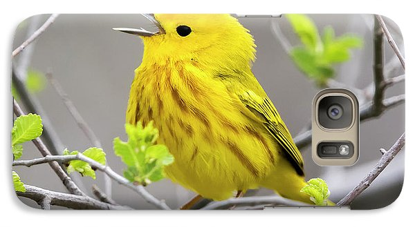 Yellow Warbler  Galaxy S7 Case by Ricky L Jones